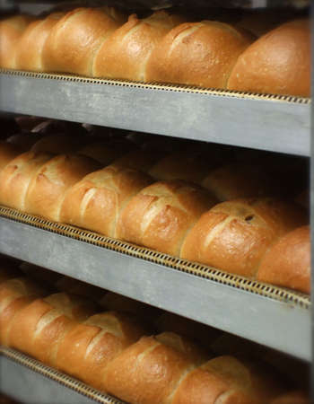 french roll: Trays of Fresh Baked Dinner Rolls in Bakery
