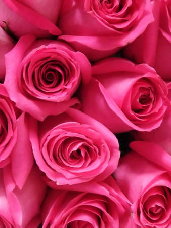 Detail of Bright Pink Bouquet of Roses Stock Photo - 3343907