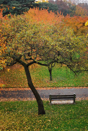 Overview of Bench in Colorful Fall Landscape Brooklyn Botanic Garden New York photo