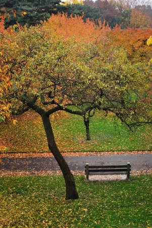 Overzicht van Bench in Colorful Fall Landschap Brooklyn Botanic Garden in New York