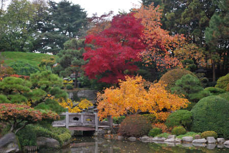japanese fall foliage: Bursts of Color in Fall Foliage in Traditional Japanese Landscape Brooklyn Botanic Garden New York Stock Photo