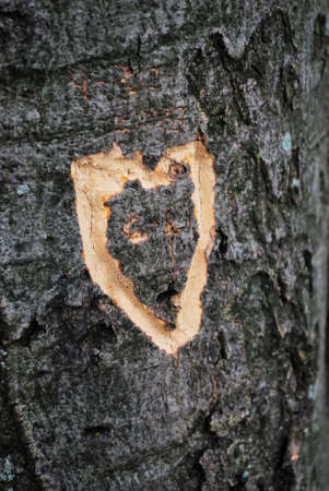 deface: Heart Shape Romance Carved into Tree Trunk Stock Photo
