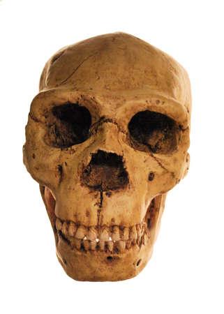 Human Skull Isolated Over White Background Stock Photo - 4149239