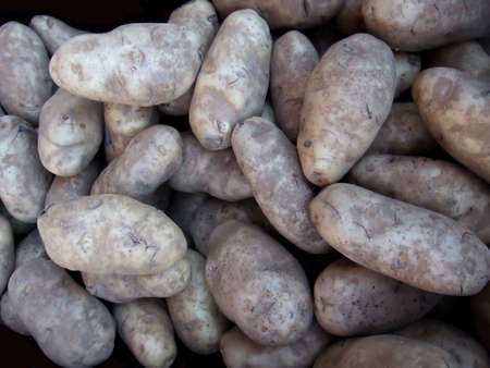 russet: An Overview of Fresh Organic Russet Potatoes