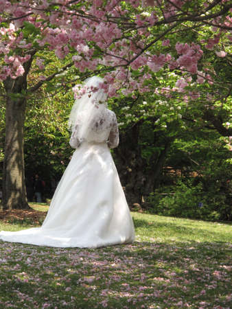 Bride in Wedding Gown Standing Under Cherry Blossom Tree photo