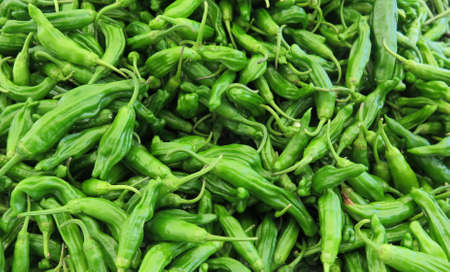 spicy cooking: Fresh green Shishito hot peppers used for cooking spicy recipes