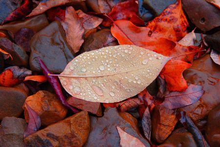 blad met regen druppels