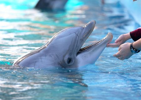 dolphin with human interaction
