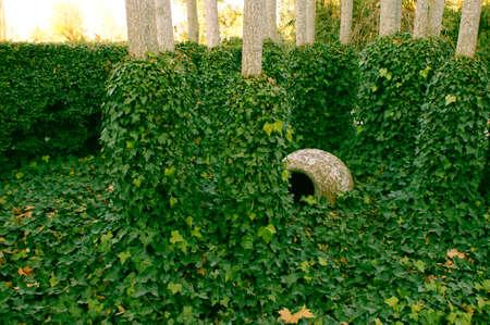 arboles frondosos: Hermoso árbol de la hiedra de hoja verde con el tarro de barro Entre Entre que 2