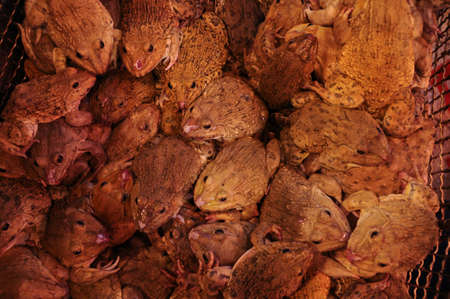 be wet: frogs crammed in a cage, waiting to be sold at a wet market Stock Photo