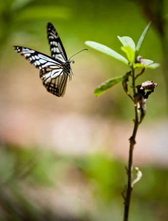 aerial animal: Butterfly about to land on a plant