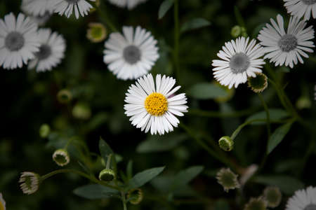 differentiate: Daisy stands out from all its peers