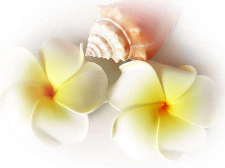 kamboja:           Frangipani (Plumeria sp.) and sea conch (Strombus sp.)