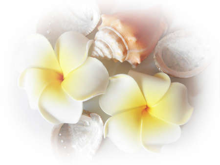 Frangipani (Plumeria sp.) and sea conch (Strombus sp. and Haliotis sp.) Stock Photo - 3708563