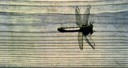 Dragonfly on weathered wood