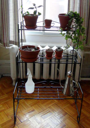 Plant stand by window