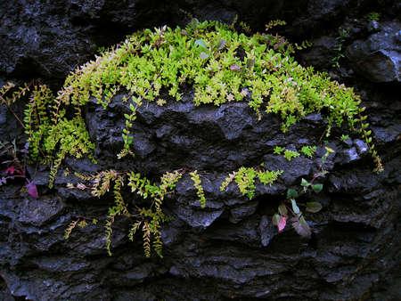 Planten groeien op rots