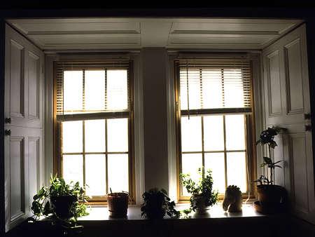 식물과 말 머리가있는 창