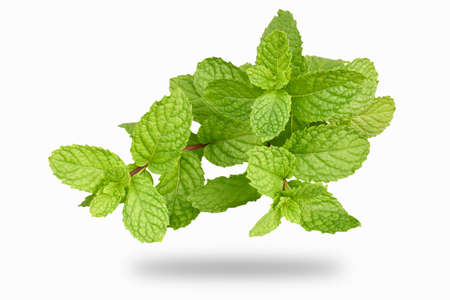 Isolate Fresh peppermint in white background Stock Photo