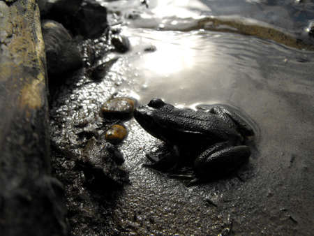 River frog silhouetted in the morning sun Banco de Imagens