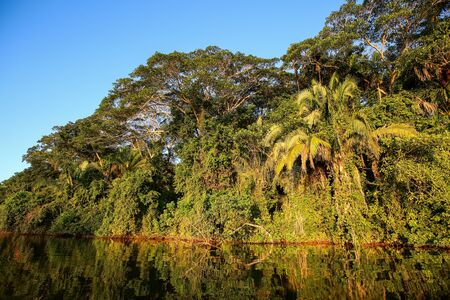 Tropical forest on the Sandoval lake. Tambopata, Peru.