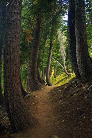 Path along the Pacific Crest Trail near Donner Pass photo