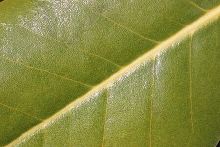 verde: detalle hoja verde