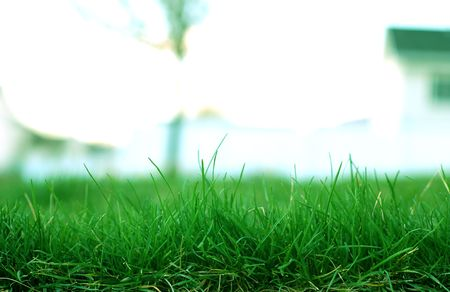 Green Grass Stock Photo - 863123