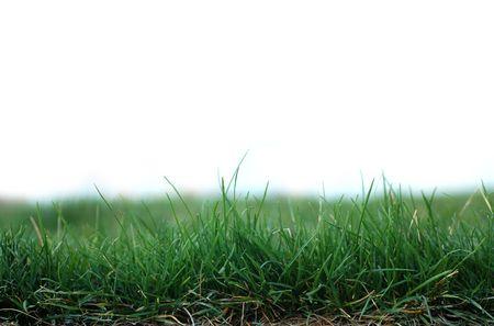 Green Grass Stock Photo - 863124