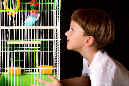 teases: Boy teases wavy parrot in a cage. learns to talk.