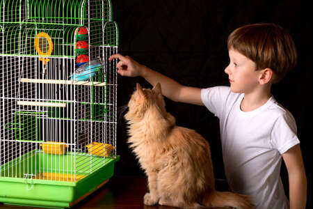 teases: Boy teases wavy parrot in a cage. learns to talk. He stuck his finger in the cage. He is sitting next to a red cat.