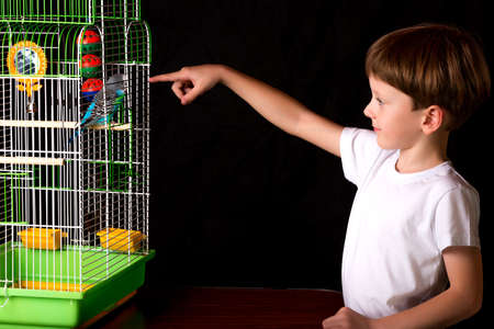 teases: Boy teases wavy parrot in a cage. learns to talk. He stuck his finger between the bars of the cage.