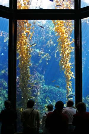 Aquarium mit Seetang und Fisch. Die Menschen in forground  Standard-Bild - 271478