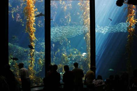 alga marina: Acuario con rayos de luz que brilla a trav�s de la cama de algas marinas  Foto de archivo