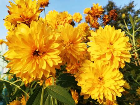 Flowers nature yelow