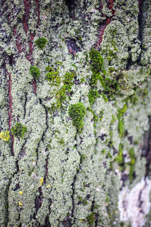 The texture of the moss on the tree. The combination of green in nature. 写真素材