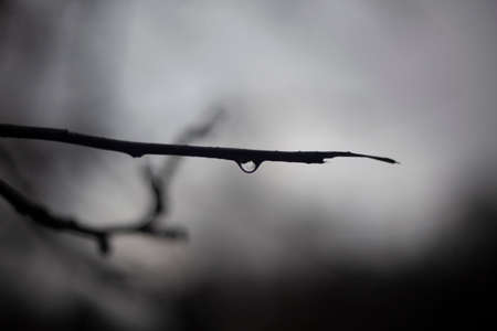 Branch of a tree. Cloudy background after the rain. 写真素材