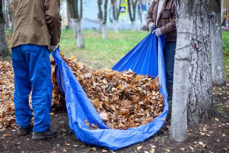 Harvesting dry leaves. Autumn restoring order.