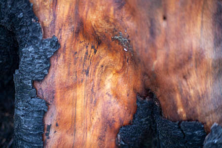 Wood texture. Wet tree without bark. 写真素材