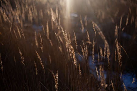 Grass in the sun. Natural plant background. 写真素材