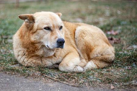 The dog freezes in the street. Abandoned dog.