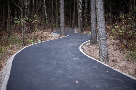 Park track repair. Paving the road in the forest. 写真素材