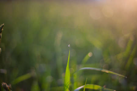 Drop on a blade of grass. Golden hour at dawn. Natural background. Dew on the grass. A delightful orange and green tone in the morning light.