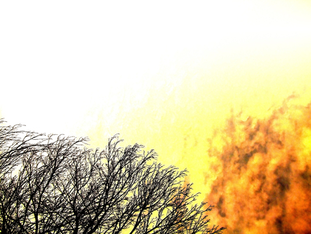 Fire getting closer to some dry tree branches. Stock Photo