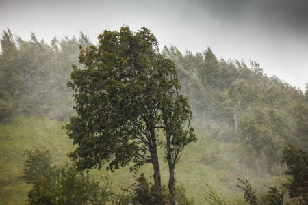 Climate change – strong winds and rain Stockfoto