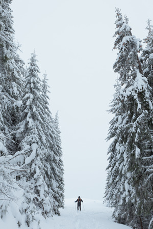 Hiker in beautiful winter landscape, snow covered spruce forest 写真素材