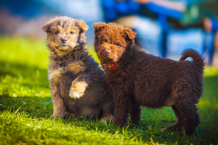 Two puppies playing while looking at the camera