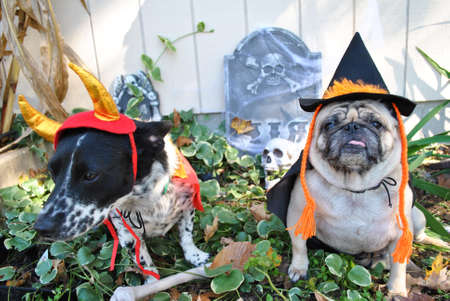mutts: Holloween Pups Dressed Up as a Devil and Witch