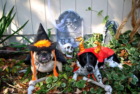 mutts: Halloween; Caught Digging Up the Bones