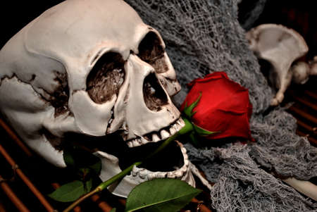 Skull with Long Stemmed Rose in Its Mouth photo